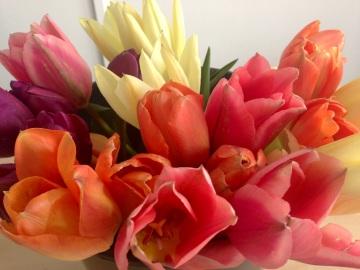tulips 19.04.13