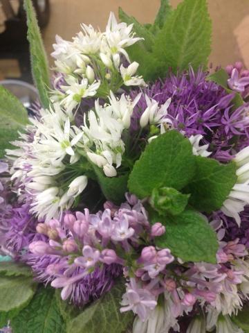 lilac,mint,allium